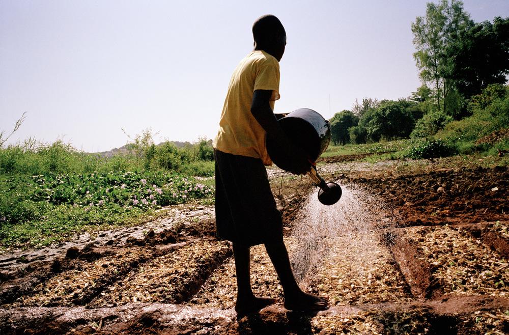 Quartier de Magnambougou, Bamako, Mali.  Jeune cultivateur arrosant une parcelle le long du fleuve Niger.