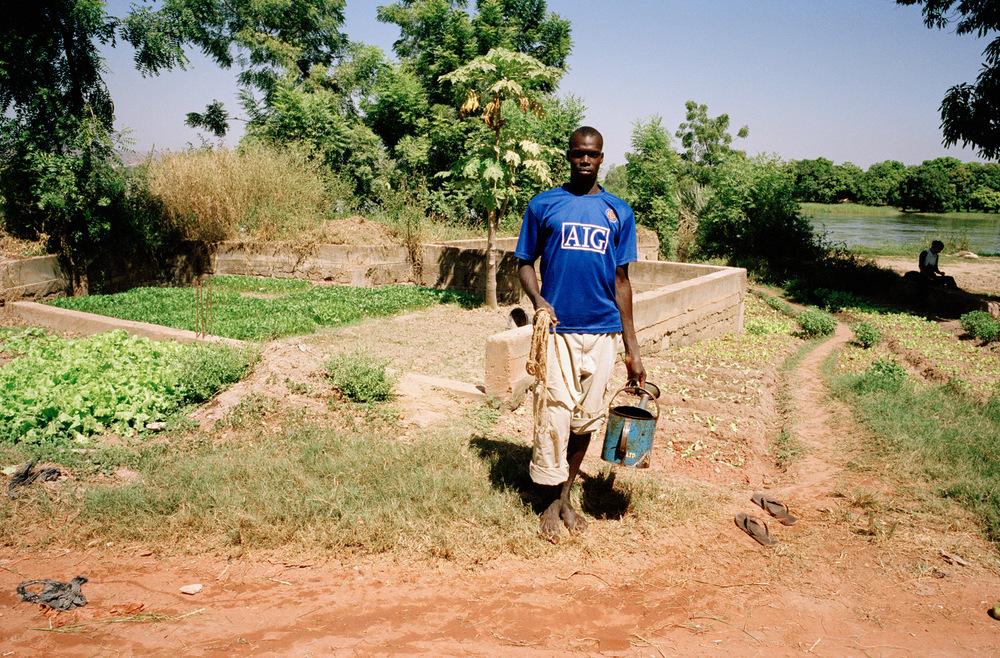 Quartier de Magnambougou, Bamako, Mali.  Maraîcher le long du fleuve Niger. Pendant les périodes de chaleur le travail est plus difficile car l'arrosage se fait sans motopompe et l'eau se fait plus rare. L'eau est puisée soit dans le fleuve soit dans les puits.