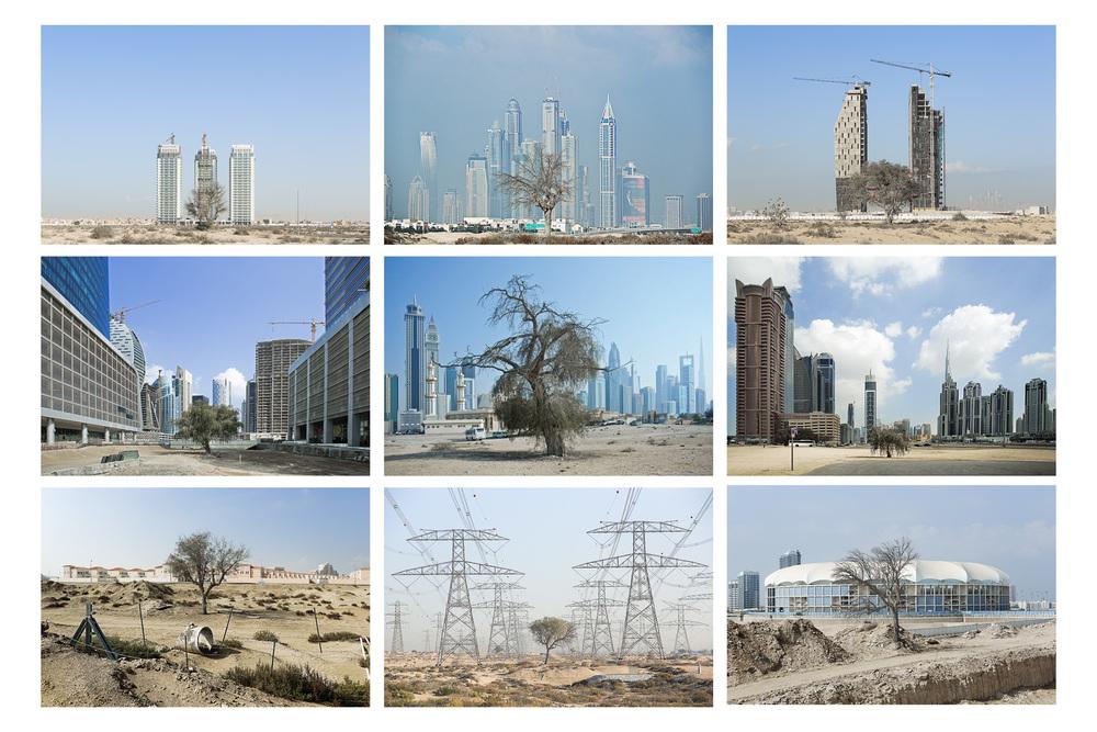 Montage s�rie Trees du projet Beyond r�alis�e en f�vrier 2014 � Dubai