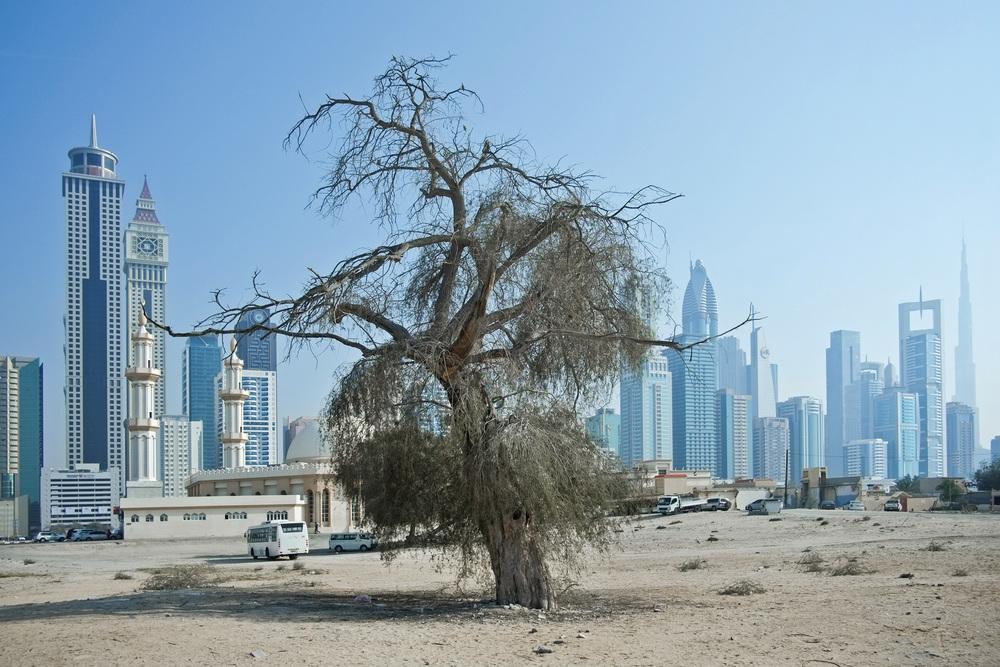 S�rie Trees du projet Beyond r�alis�e en f�vrier 2014 � Dubai