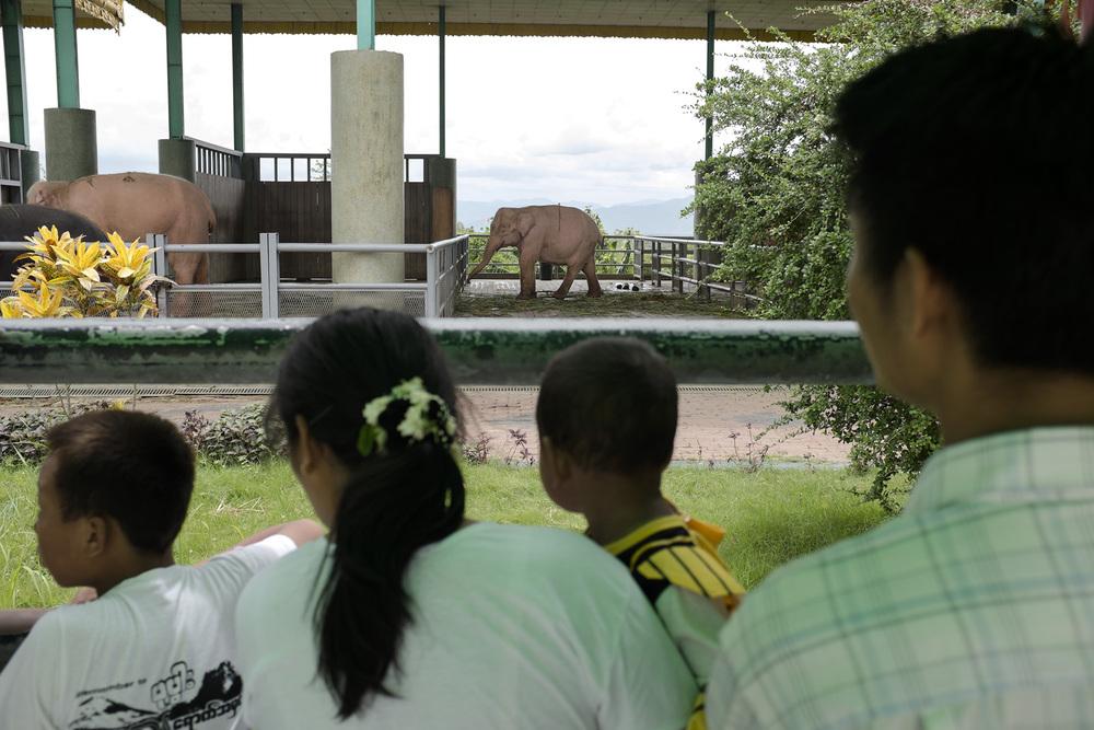 Des touristes observent les éléphants blancs porte bonheur des généraux dans leur enclos de la pagode Uppatasanti. Naypyidaw, Birmanie. Mai 2015.