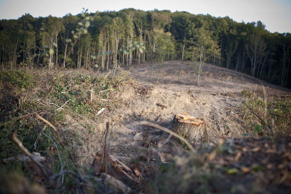 A Sivens, commune de Lisle sur Tarn. Le  vendredi 24 octobre 2014. Le site defriché depuis la mi septembre apres l'evacuation de la zone part les forces de l'ordre est réoccuper pour le week end par les opposants un projet de barrage agricole.