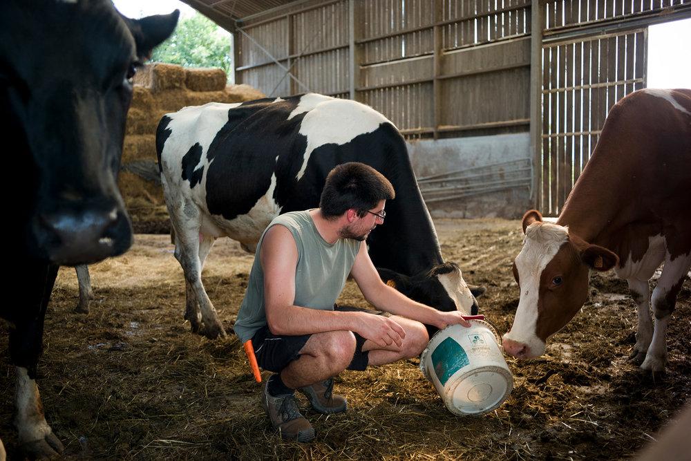 Adrien Lefevre, 25 ans, est producteur de lait du label équitable Fairefrance. Sorcy Bauthémont, Ardennes, région Alsace-Champagne-Ardenne-Lorraine, 26.08.2016