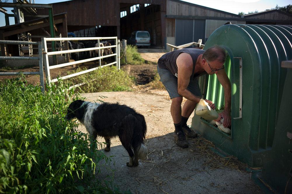 Francis Closquinet, producteurs de lait du label équitable Fairefrance, sur son exploitation. Donchery, Ardennes, région Alsace-Champagne-Ardenne-Lorraine, 26.08.2016