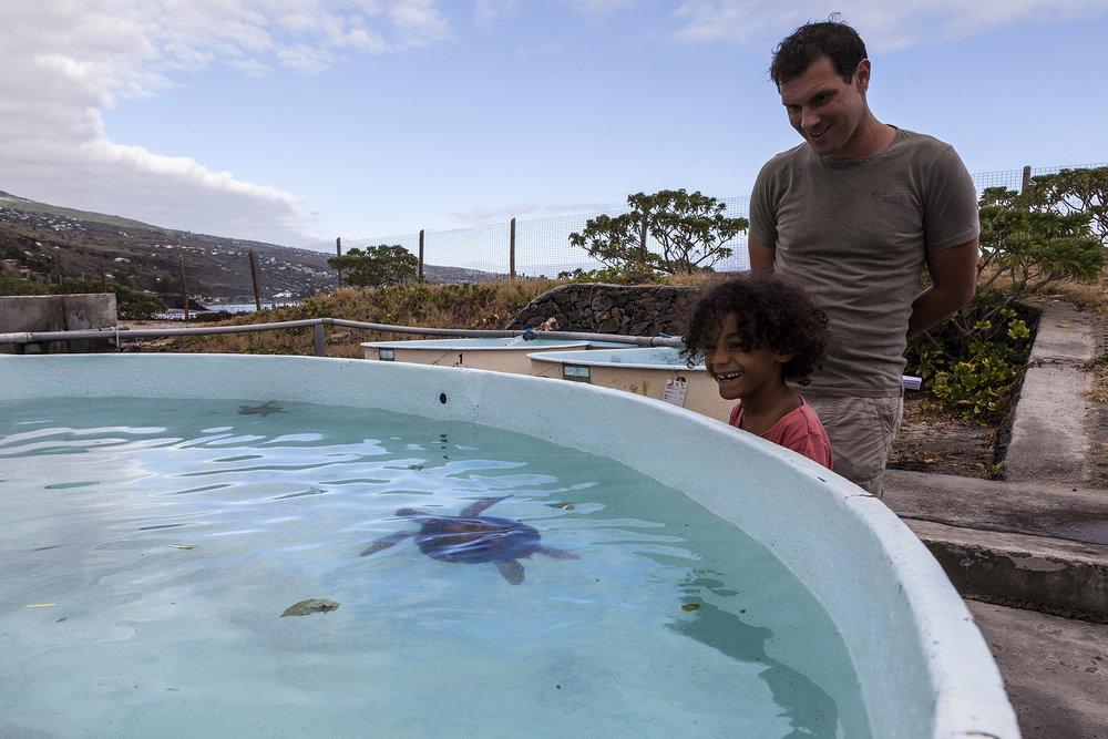 28 juin 2014, des visiteurs à Kélonia qui est l'observatoire des tortues marines de la Région Réunion. Saint-Leu, Ile de la Réunion