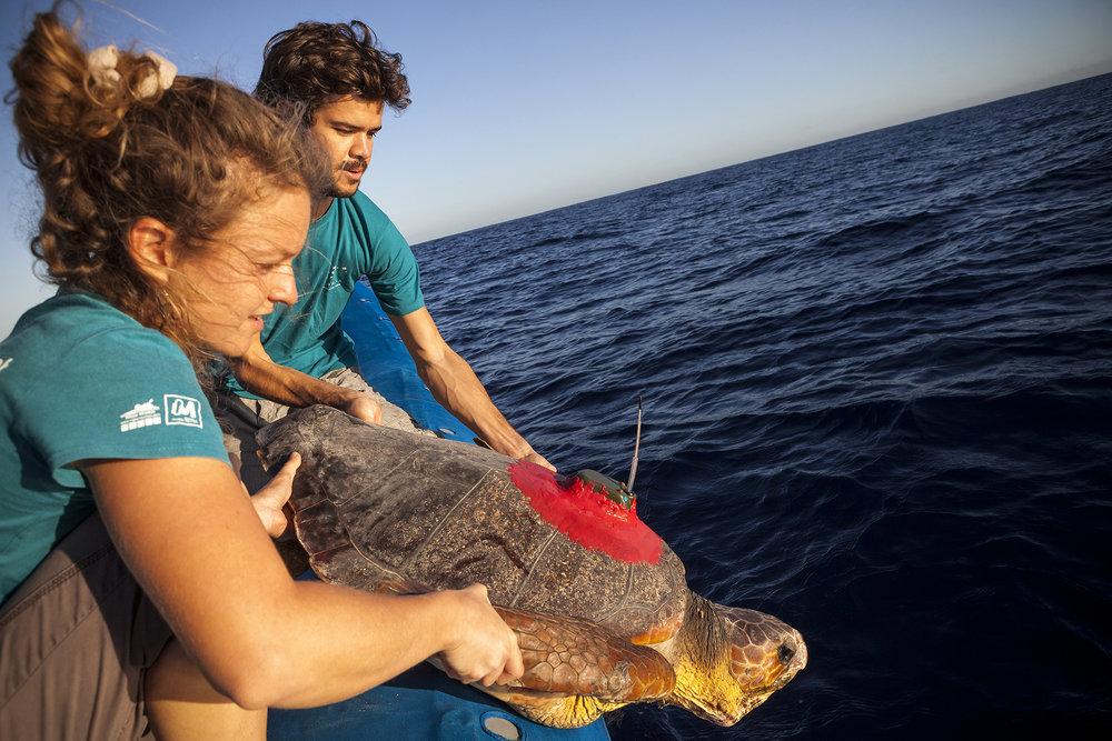 2 juillet 2014, Mayeul Dalleau et des membres de l'équipe de Kélonia relâchent en mer 2 tortues caouannes au large de la ville du Port, commune de la côte ouest de l'île de La Réunion, département d'outre-mer français de l'océan Indien.