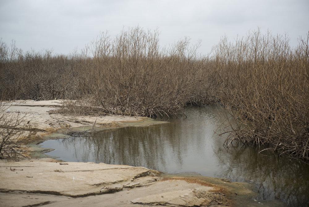 île de Sangomar, Delta du Siné-Saloum. Sénégal.