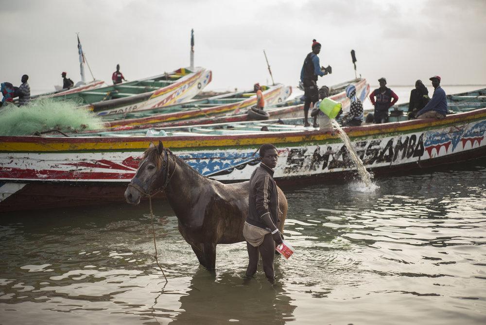 Djifer, zone de débarquement de produits de la mer, Delta du Siné-Saloum. Sénégal.Les pêcheurs sénégalais éprouvent de plus en plus de difficultés à trouver les ressources halieutiques. Il y a encore 15 à 20 ans, les côtes étaient si poissonneuses qu'ils n'étaient pas obligés d'aller pêcher au-delà de 5 km. Actuellement, les pêcheurs confient parcourir une dizaine de kilomètres à la recherche de poissons. Une étude menée par le projet Usaid Confish en 2016, révèle que le Sénégal perd 145 milliards de Fcfa (env 221 millions €) chaque année à cause de la pêche illégale industrielle.