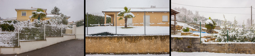 palmiers-neigeweb.jpg