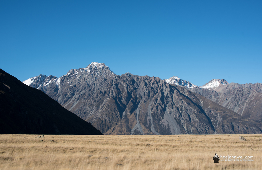 Hooker Valley meadow and glacier dusted mountain.