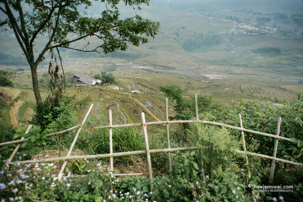 Bamboo fence at the foreground shape the leading line towards the handcrafted terraced paddy field of Muong Hoa Valley.