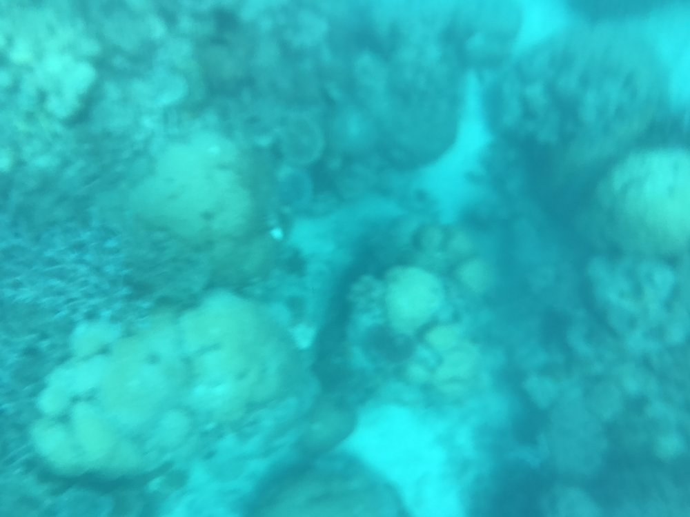 This is the only picture i managed to take underwater, i tried to focus by touching on the screen, it just couldn't register. Damn you Vansky!