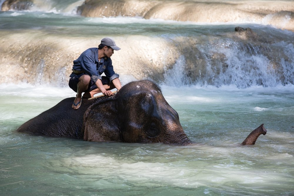 A Lao mahout and an elephant bathe at Tad Sae waterfalls.