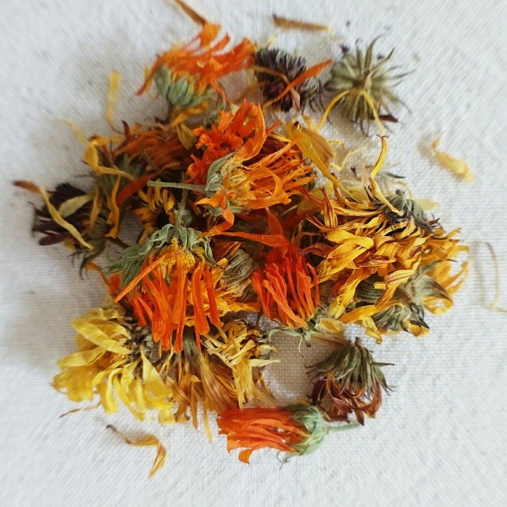 Marigold (Calendula officinalis)