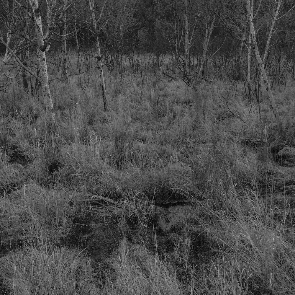 wild_grass_web.jpg