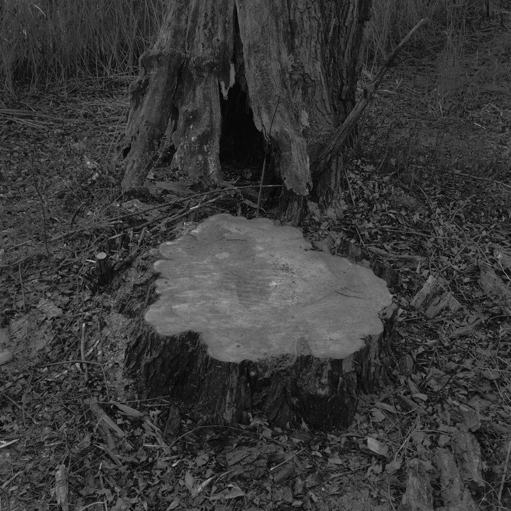 single_stump_web.jpg