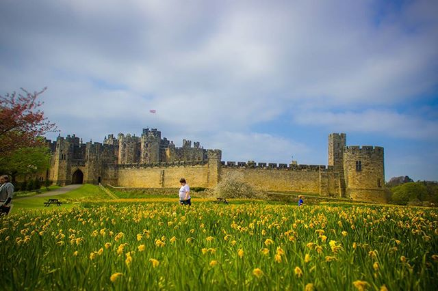 A perfect day at Alnwick castle! Not at all a Potter fan! Was just exploring the hype! . . . . . . . . . #alnwick #alnwickcastle #northumberland #lonelyplanetengland #lonelyplanet #travel #travelandexplore #citizenoftheworld #travelgram #northeastcaptures #thegreatquotator #castle #landscape #flowers #yellow #travel_shout_outs #newcastle #harrypotter #northeastengland #northeastenglandphotography #lonodon #thisislondon