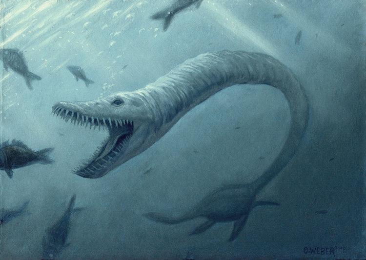 elasmosaurus owen william weber illustration