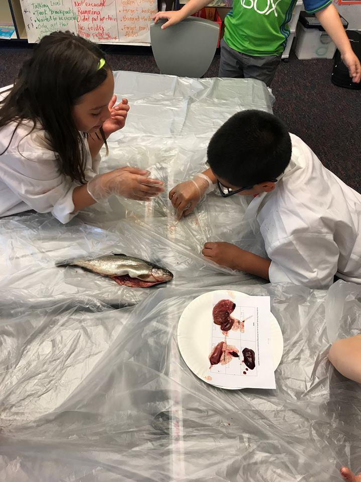 kids dissect.jpg