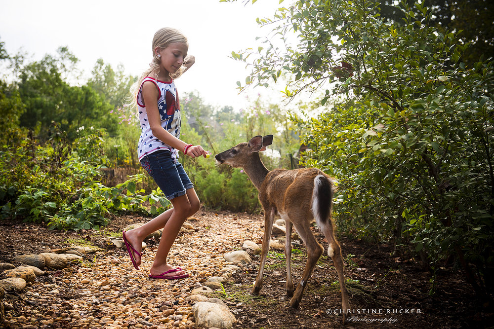 """Farrah"", our resident fawn follows one of our guests looking for more treats."