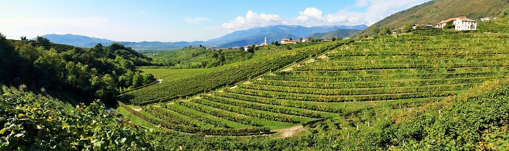 The hill of Cartizze in the Prosecco wine region. The highest quality appellation sparkling wines are produced here.