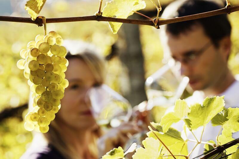 couple sampling wine in a  italian vineyard