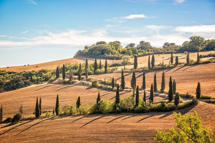 Beautiful typical landscape of Tuscany with rows of cypresses, La Foce, Tuscany, Italy
