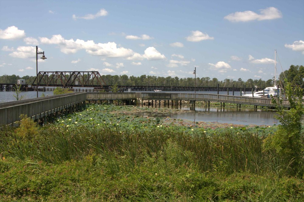 Washington Wetlands 1.jpg