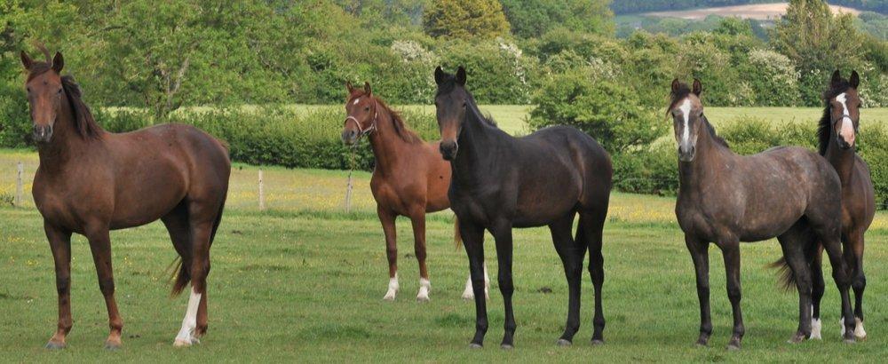 cropped-foals.jpg