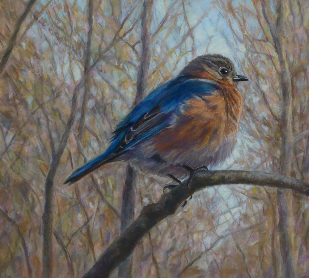 """Eastern Bluebird,"" pastel, 9""x10"""