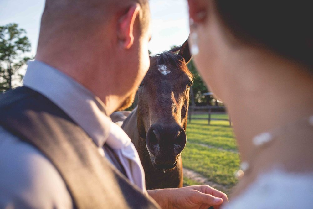 Lakeview_Farm_Wedding_Cambria_Creative-2947.jpg