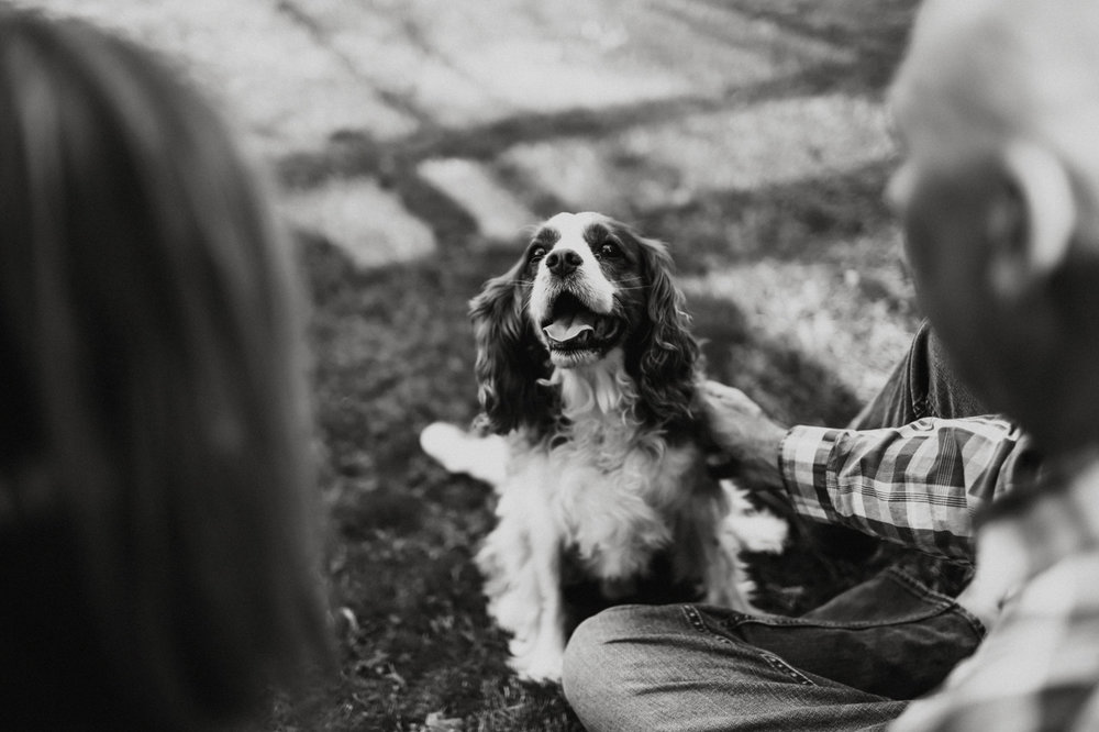 Cambria_Creative_Photography_Puppy_Portrait_Lancaster_Family_Session-5385.jpg