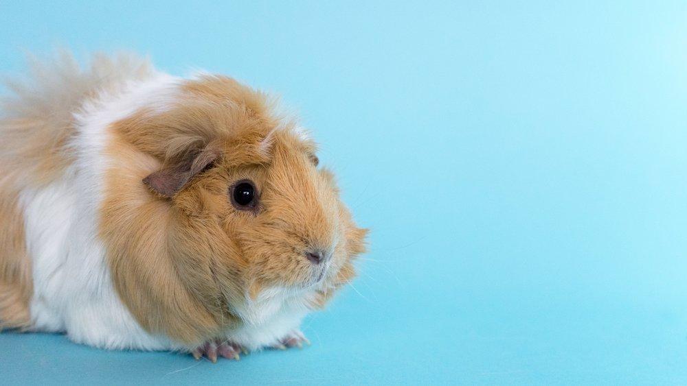 10twelve-marketing-animal-hospital-vet-socialmedia.jpg