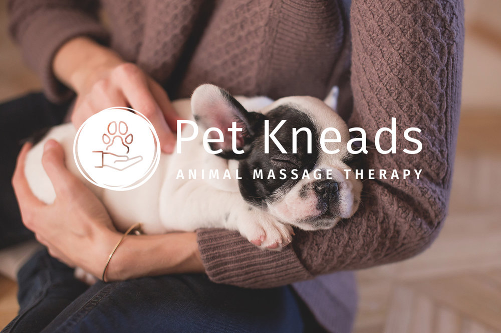 PetKneads-pexels-photo-129634_small.jpg