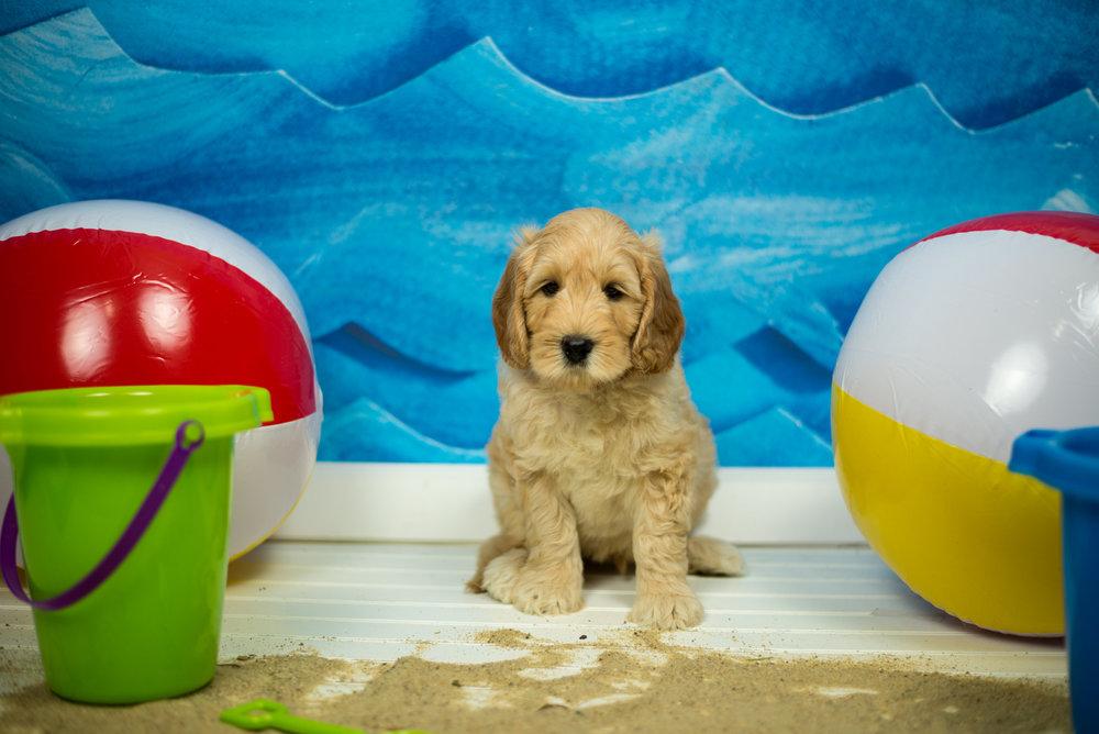 puppy 2-0011.jpg