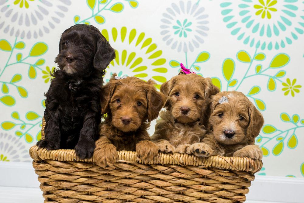 puppies-0023.jpg