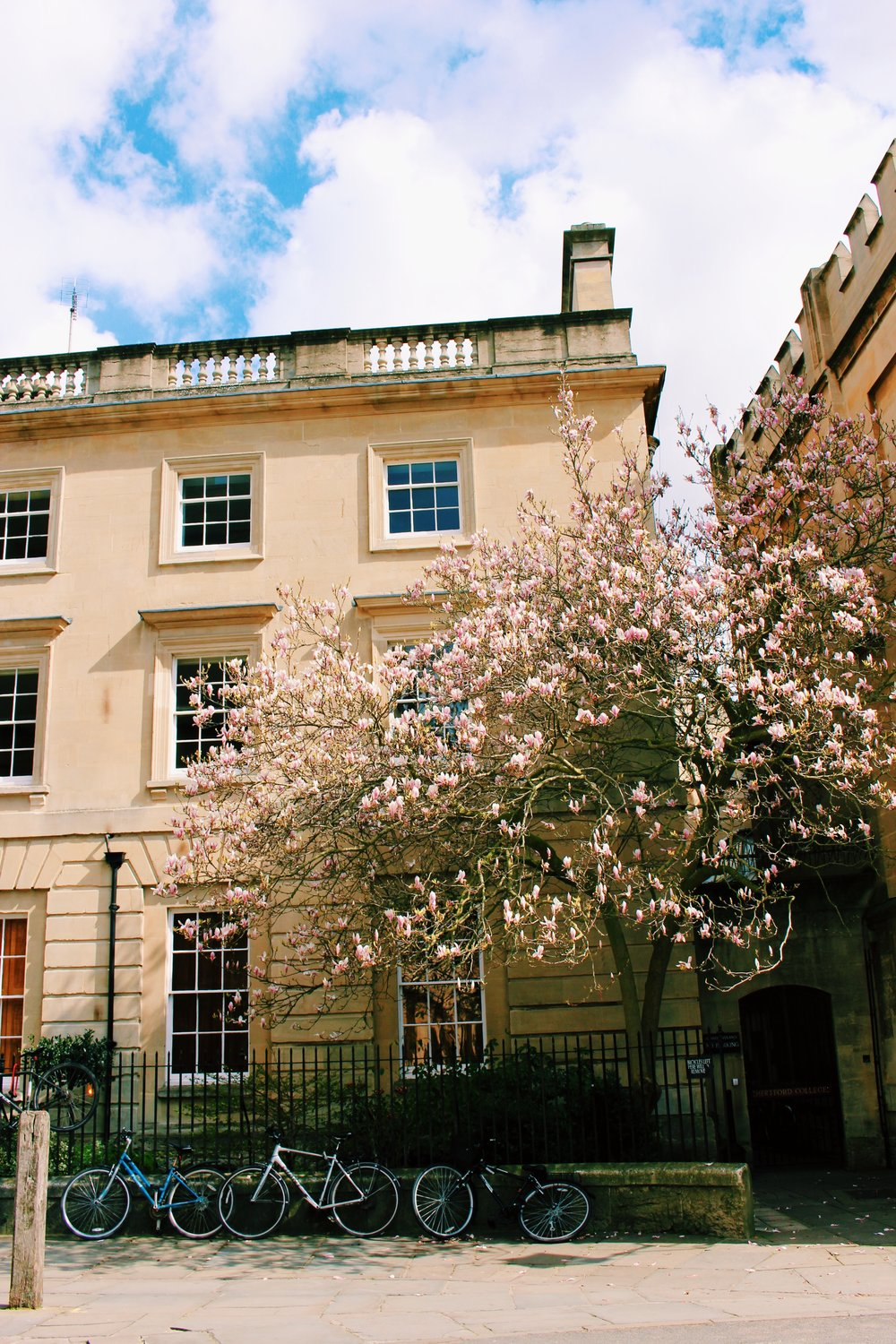 flower tree oxford copy.jpg