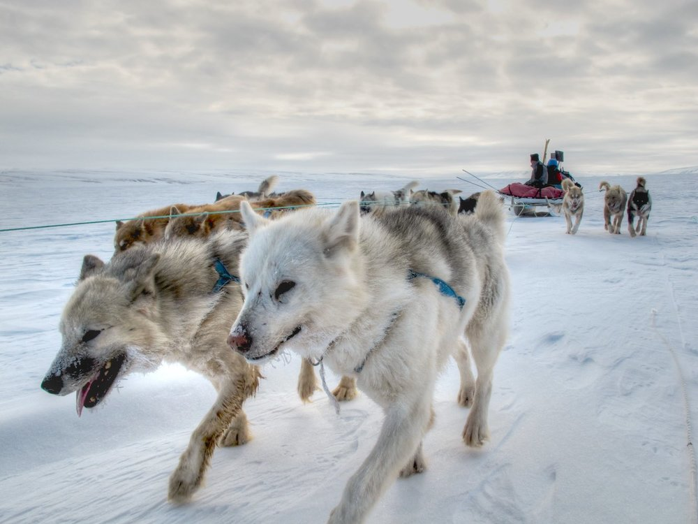 Dog sledding to Far North Liverpool Land