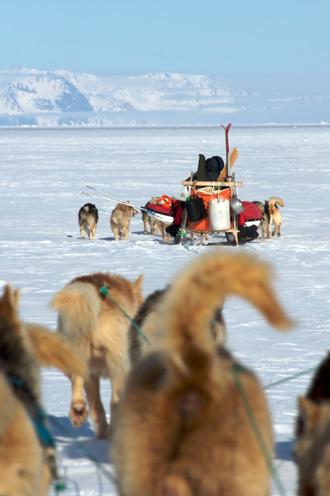 Dog sledding down the Klitdal Valley