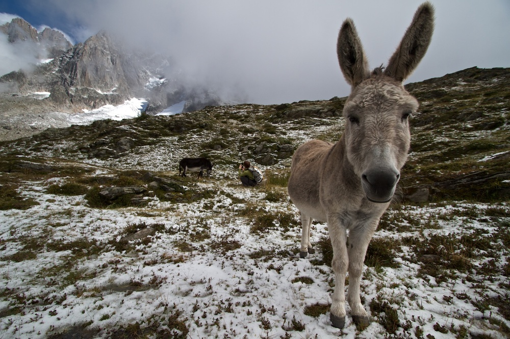A friendly donkey during a hike around Chamonix