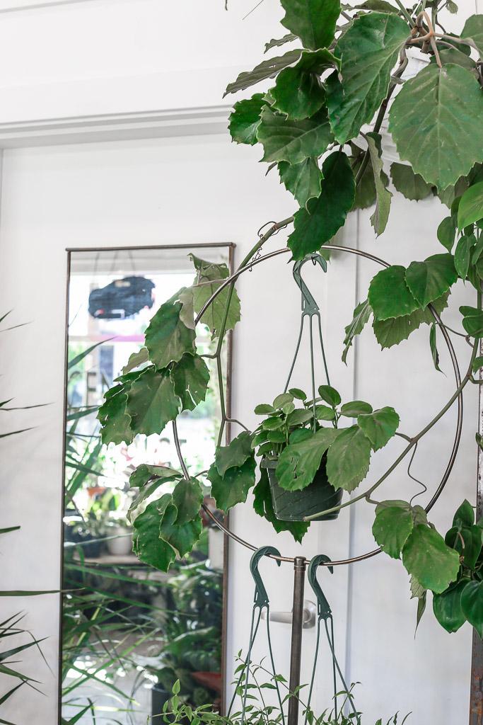 Plant Shop (8 of 14).jpg