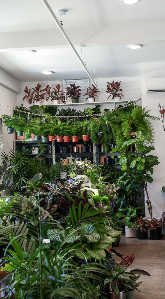 Plant Shop (12 of 14).jpg