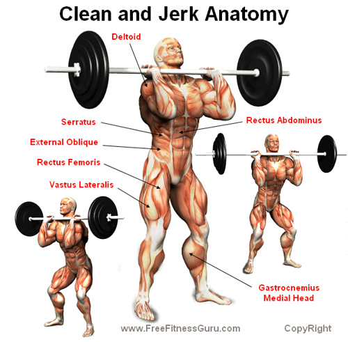 clean-and-jerk-anatomy2