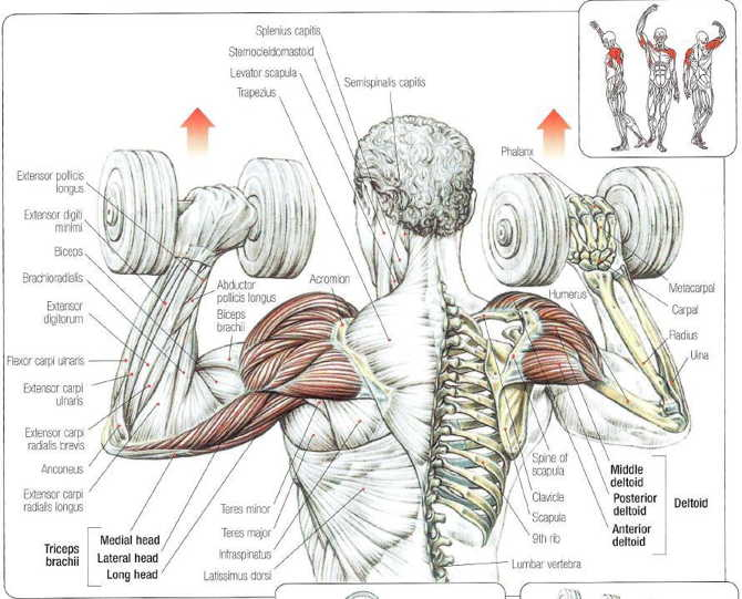 seated_dumbbell_presses