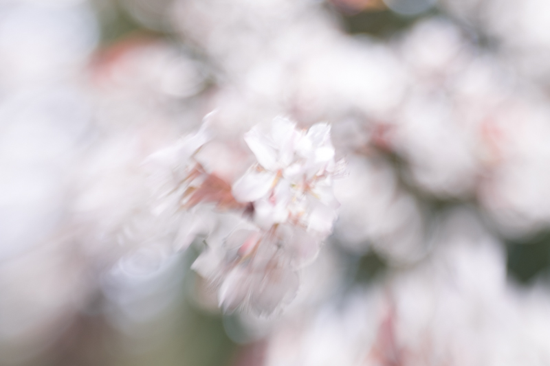 50mm lens, shutter speed 1/200th: the wind has blurred the blossom even at this relatively fast shutter speed
