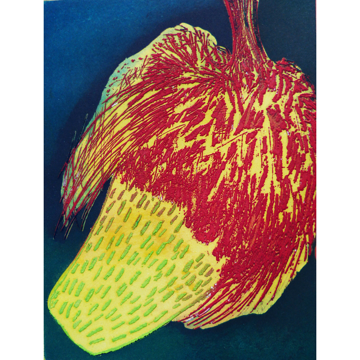 Banksia yellow Etching Unframed £95