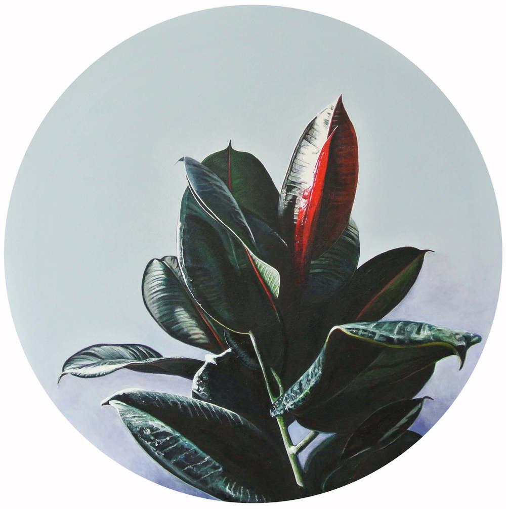 Gummibaum 2 – Flowers and Plants, Durchm. 50 cm, © Ute Latzke, 850 Euro.