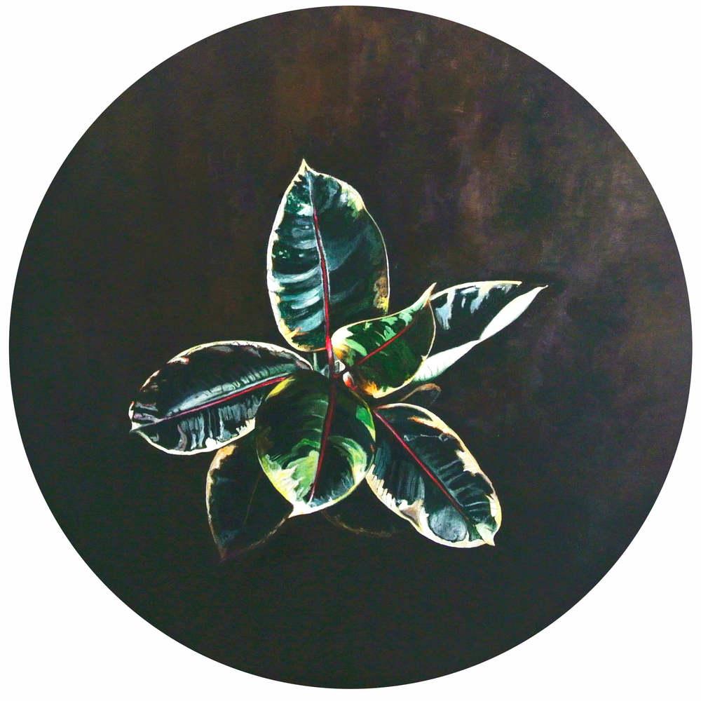 Gummibaum – Flowers and Plants, Durchm. 50 cm, 2015, © Ute Latzke, 850 Euro.