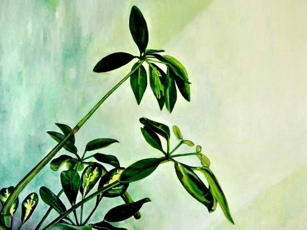 Schefflera – Flowers and Plants, 50x60 cm, © Ute Latzke, 1100 Euro.