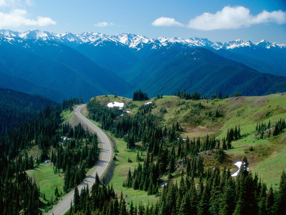 Road through Olympic National Park